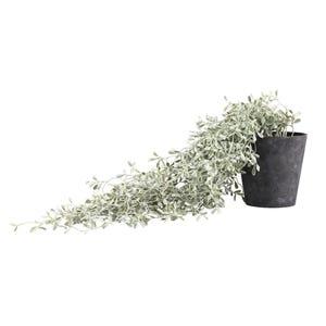 PTMD Kunstplant - Buxushout tak in pot